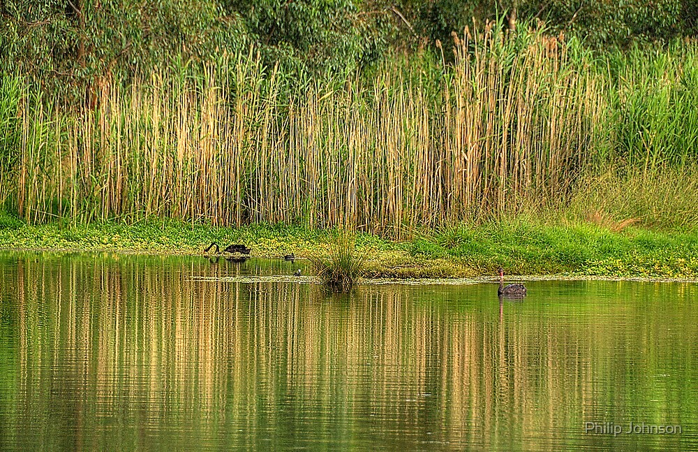 In A Rush - Wonga Wetlands, Albury NSW - The HDR Experience by Philip Johnson