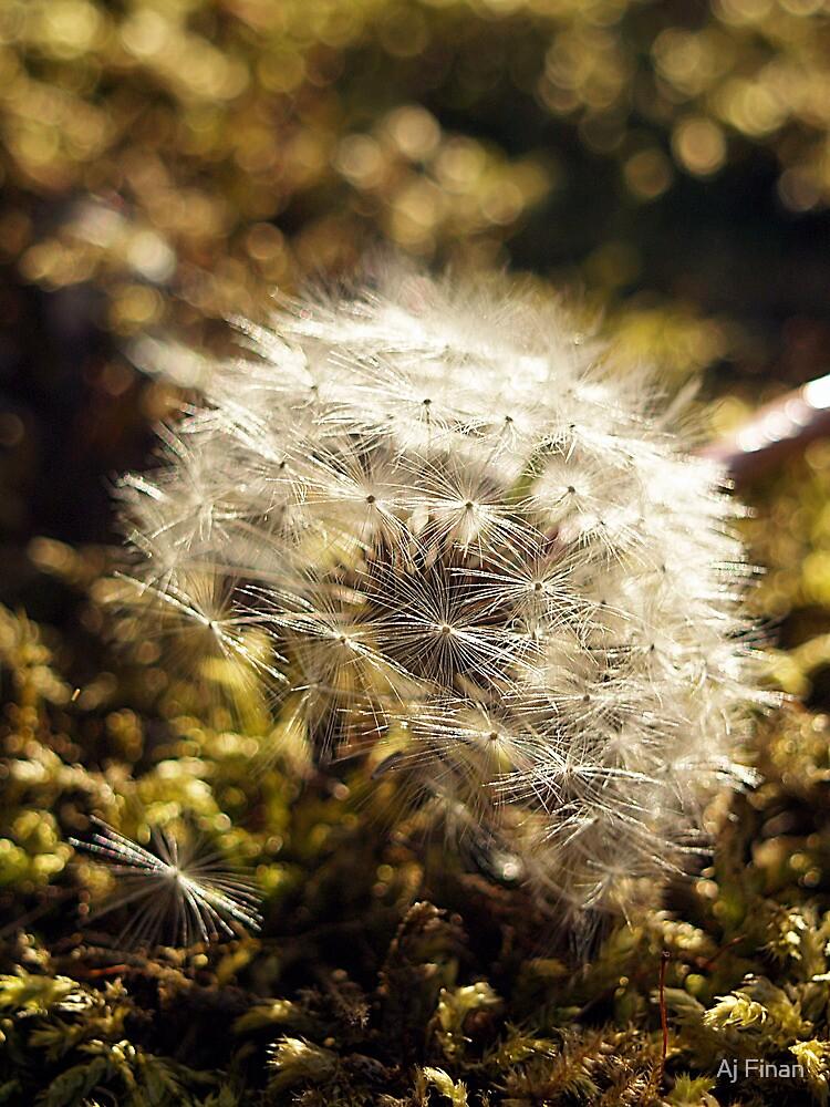 A Fallen Dandelion  by Aj Finan