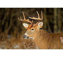 Profile of a Buck  Photographic Print