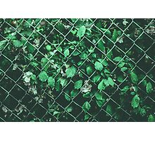 The Day I Watched Myself across the Fence Photographic Print