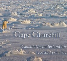 Cape Churchill by Owed to Nature