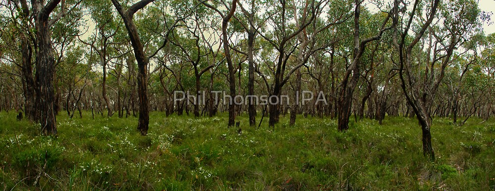 Anglesea Heathland by Phil Thomson IPA