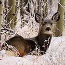 In the Winter Woods by EchoNorth