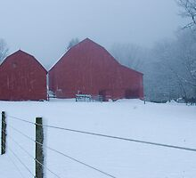 Blizzard Obscured Red Barns by Gene Walls