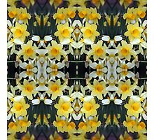 Daffodils - In the Mirror Photographic Print