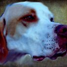 Every dog has it's day and the difficulty with noses! by oulgundog