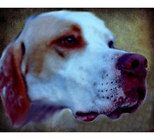 Every dog has it's day and the difficulty with noses! Photographic Print