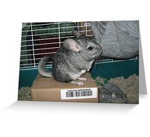 Cute Chinchilla Greeting Card