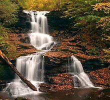 Tuscarora Under Newfallen Leaves by Gene Walls