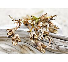 Withered Beauty Photographic Print