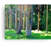 Rainbow Trees of Maui Canvas Print