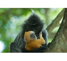 Unbelievable Lutung Photographic Print