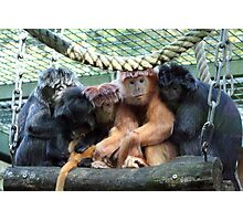Super Lutung Photographic Print