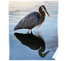 Great Blue Heron and his Reflection Poster