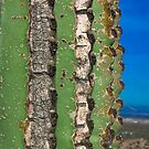 Saguaro by Peter Maeck