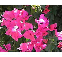 Pink Peace Photographic Print
