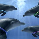 """""""Hula Play"""" - dolphins playing with the hula hoop by John Hartung"""