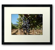 Grapes at Napa Vineyard Framed Print