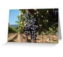Grapes at Napa Vineyard Greeting Card