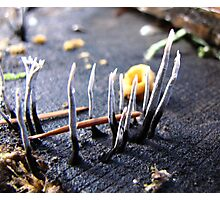 Fungus - Forest of Grants Pass, Oregon Photographic Print