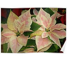 Poinsettias in the Park Poster