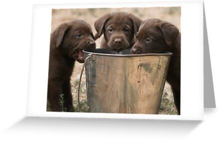 The Bucket Brigade by Bill Maynard