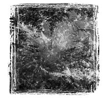 The Atlas of Dreams - Plate 19 (b&w) Photographic Print