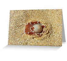 T3 Rose Bubble Snail Shell Greeting Card