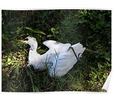 Death Great Egret Poster