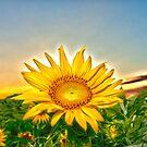 """Flowering Sun"" - sun setting behind sunflower by ArtThatSmiles"