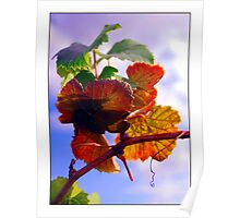 colourfull flowers Poster