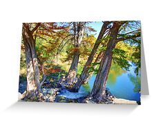 Guadalupe Cypress Greeting Card
