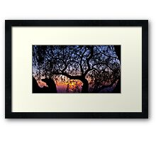 Sunrise through a tree Framed Print