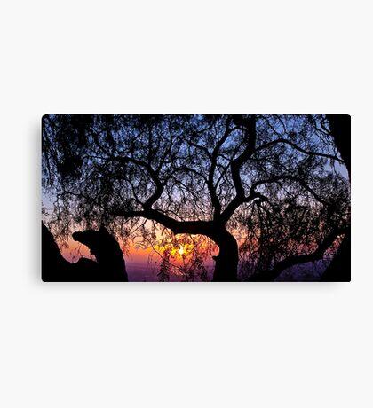 Sunrise through a tree Canvas Print