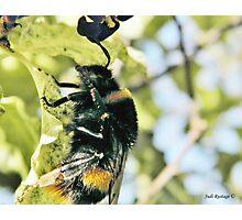 Honey maker Photographic Print