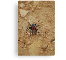oz spider Canvas Print