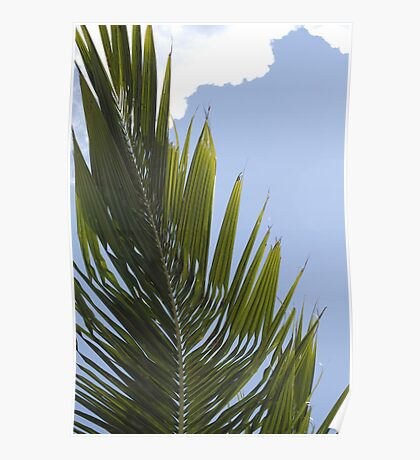 carribean palm Poster
