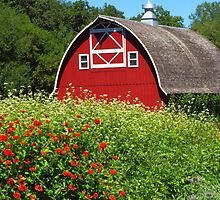 Barn Beyond the Garden by lorilee