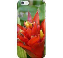 Red Bromeliad iPhone Case/Skin