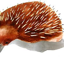 echidna by hollyobaby