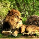 African Lion  by Saija  Lehtonen