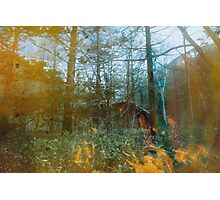 Forest Entomology Photographic Print