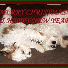 HAVE A MERRY DOGGY CHRISTMAS! by LadyE