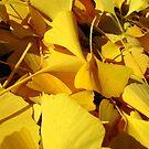 Yellow Leaves, Everywhere! by Jennifer  Gaillard