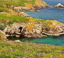 bluebells on Saltee Island, County Wexford, Ireland by Andrew Jones