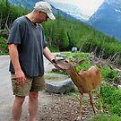 Friendly Deer by JamesA1