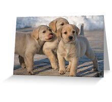 Best Buddies Greeting Card