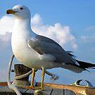 Like a bird...free by mrvica