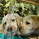 Nose Wash Station by Bill Maynard