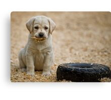 Born Retriever Canvas Print